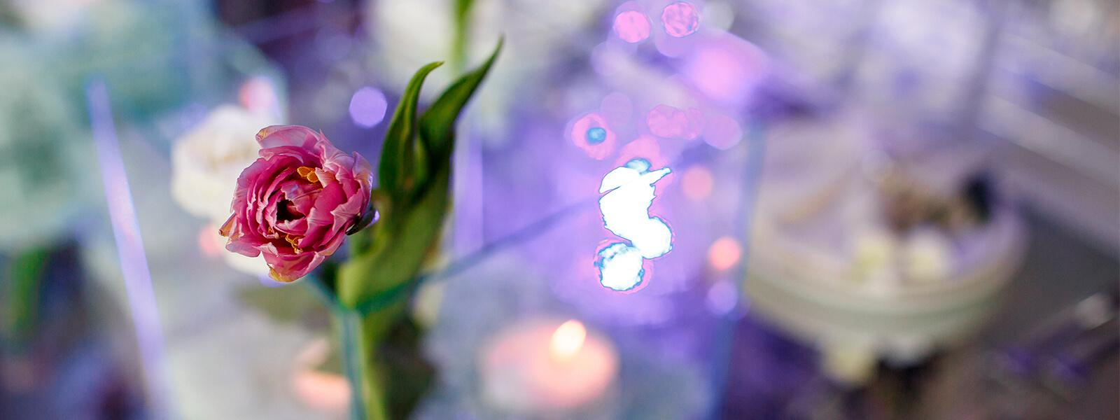 Вишневый сад. Свадьба Валентина Кротова и Натальи Ходуновой